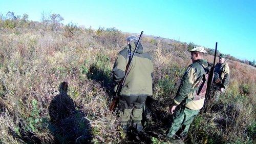 Охота на фазана  Открытие 2018