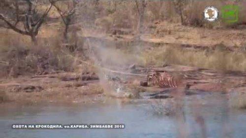 Охота на крокодила. (оз.Кариба. Зимбабве)