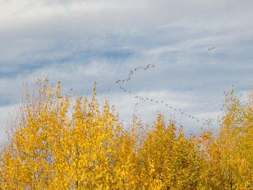 Осень на хвосте несут.