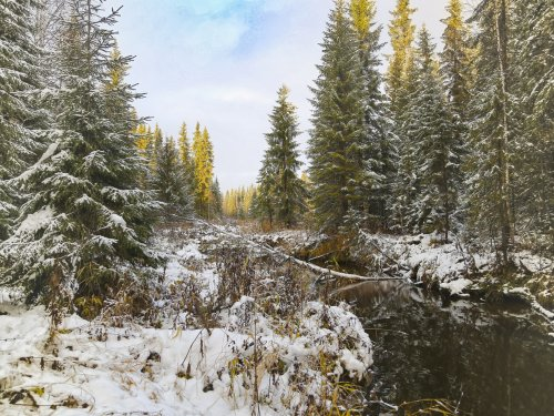 лесная речка, первый снег