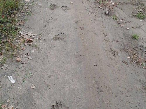 Следы на дороге вдоль Енисея