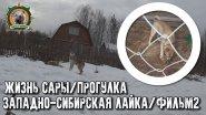 Жизнь Сары/Западно-сибирская лайка/Фильм2/Прогулка