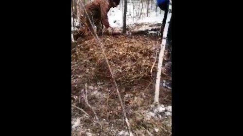 На Камчатке появилось видео с места нападения медведя на подростков