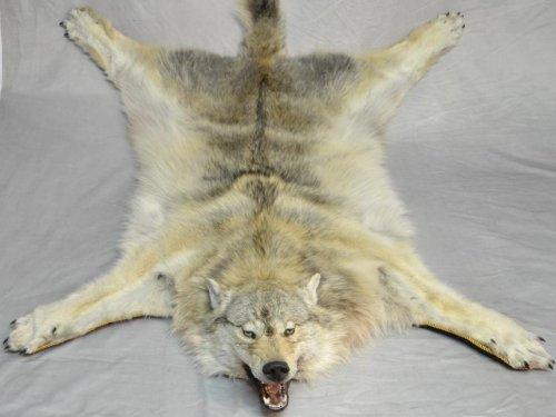 Ковер из волка.