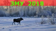 Зимний маршрутный учет 2018  ЗМУ 2018