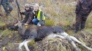 Охота на лося. Девчонки на номере и в загоне