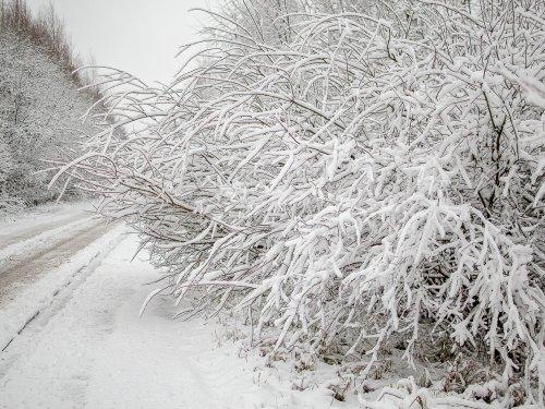 Вот и к нам зима пришла.