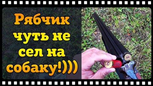 Охота на рябчика по полям с русским охотничьим спаниелем.
