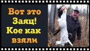 Охота на зайца с русской гончей. Если б не наша