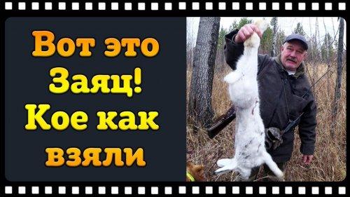 """Охота на зайца с русской гончей. Если б не наша """"Кенарка"""", остались бы ни с чем!"""