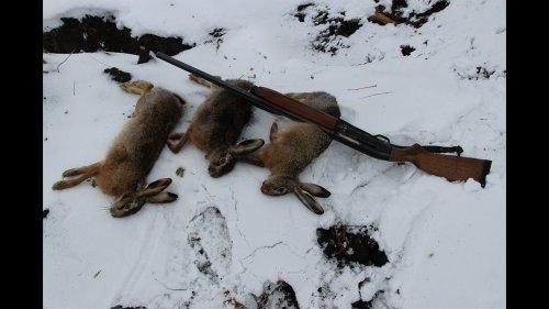 Зимняя охота на зайца и лису с эстонскими...