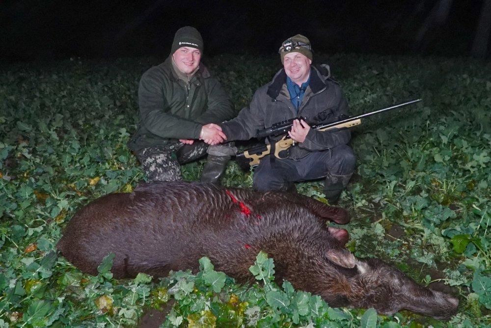 Охота на лося в Беларуси