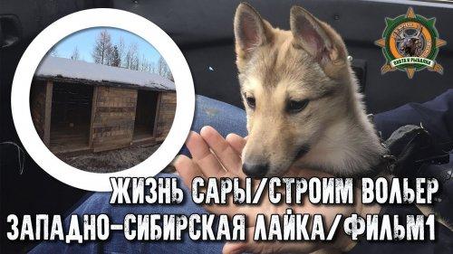 Жизнь Сары/Западно-сибирская лайка/Фильм1/Стройка вольеров