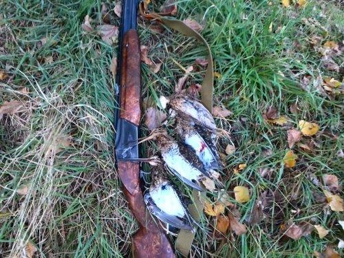 Охота на бекаса и перепёлку в конце ноября 3