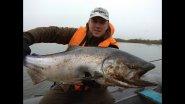 За королевским лососем на Камчатку.  Рыбалка на чавычу на реке Большая.