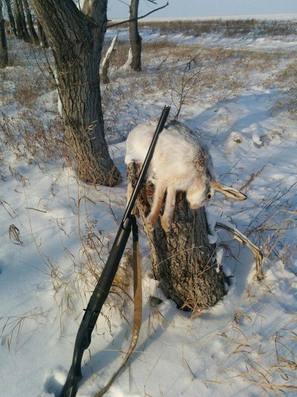 Охота на зайца троплением, без собак и загонщиков .