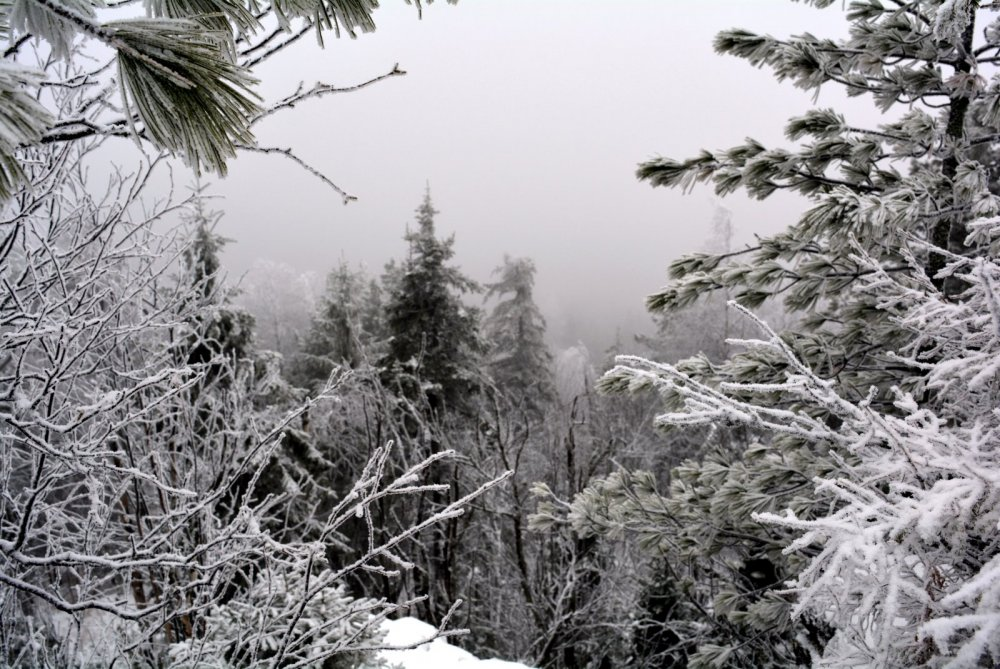 Утро, туман над тайгой.