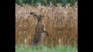Охота на зайца. Открытие - часть первая