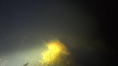 Подводная охота. За крупными карасями в ноябре. Закрытие сезона.