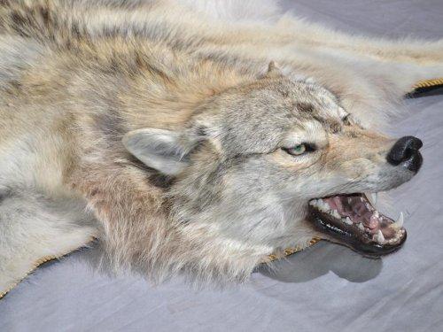 Ковер из волка