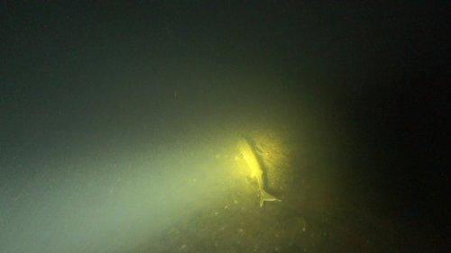 Подводная охота в Коми. Встреча с осетровыми. Осень 2018.