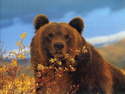 Три роковых медведя.    Так ли все просто?