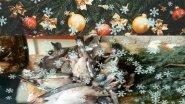 Охота на голубя Результат