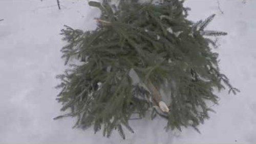 Охота на куницу часть 3,прошел снегопад,нет выхода куницы.