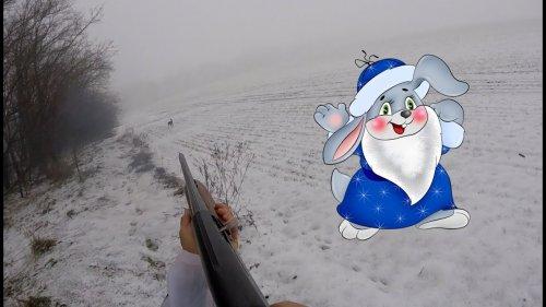 Охота на зайца. Русак уходящего года
