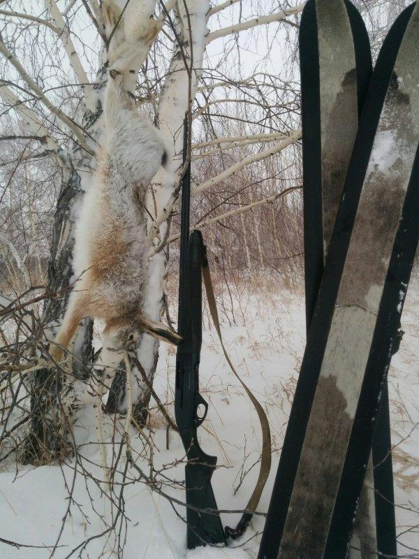 Охота на зайца без собак и загонщиков.