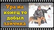 Охота зимой на зайца беляка с русскими гончими.