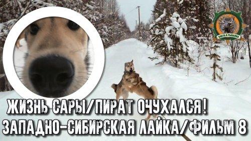 Жизнь Сары/Западно-сибирская лайка/Фильм8/Пират очухался!