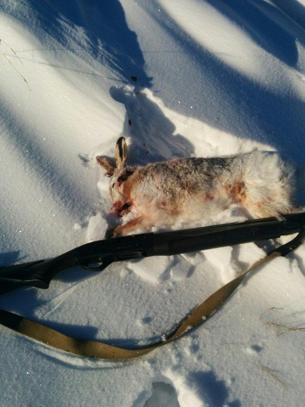 Охота на зайца ,  без собак и загонщиков.
