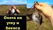 Охота на утку и бекаса