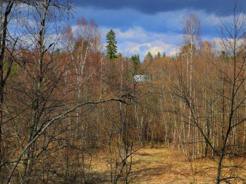 Весна. Новгородская область