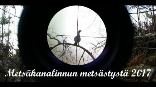 Охота в Финляндии (рябчик, тетерев, глухарь)
