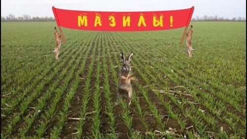 Охота на зайца. Промахи и ошибки