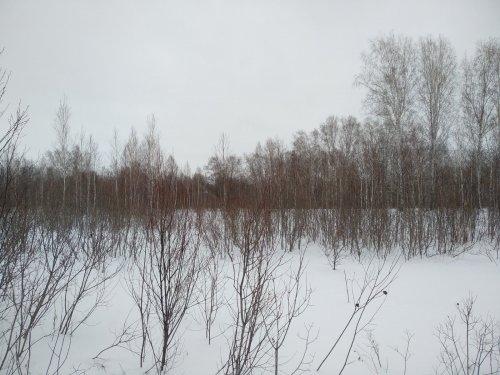Январь,после морозов -4