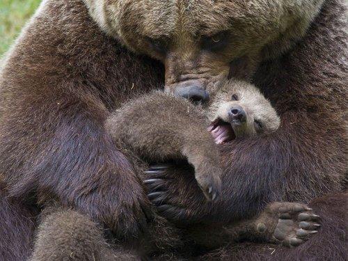 Медведь загнал охотника на дерево: случившееся потом удивило