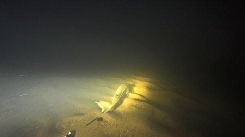 Подводная охота на реке Вычегда. Встреча с осетровыми. Подводное ружье Таймень 700.