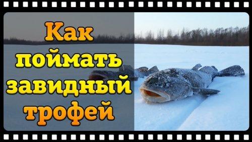 Как поймать налима зимой, тонкости и секреты ловли на реке.
