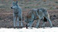 Охота на волка в степи. Как мы пытались спасти Астраханскую степь от волков.