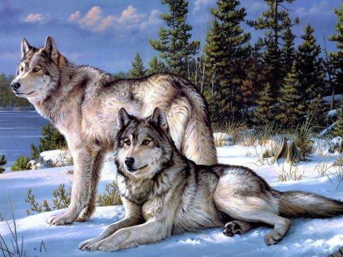 Охота на волков. Весьма правдивая история