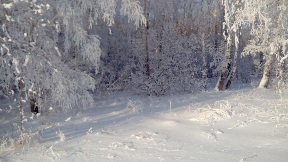 Зимнее безмолвие