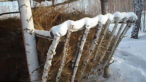 Подкормка косули в зимнее время.