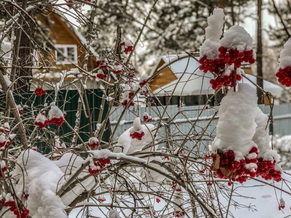 Зимой и летом одним цветом!