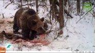 #9 Вести из леса. Медведь пришел на падаль.