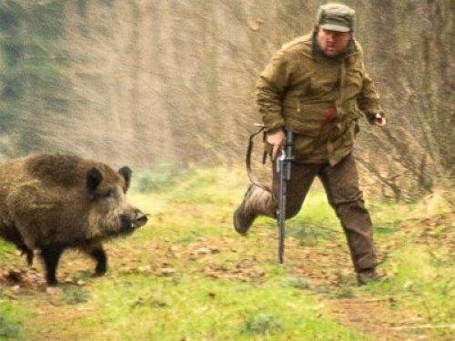История про охоту на кабана