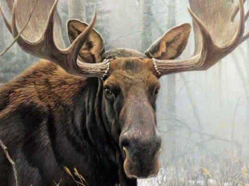Женщина-охотник застрелила самого крупного лося