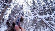 Тропление зайца. Охота на рябчика с подхода зимой.